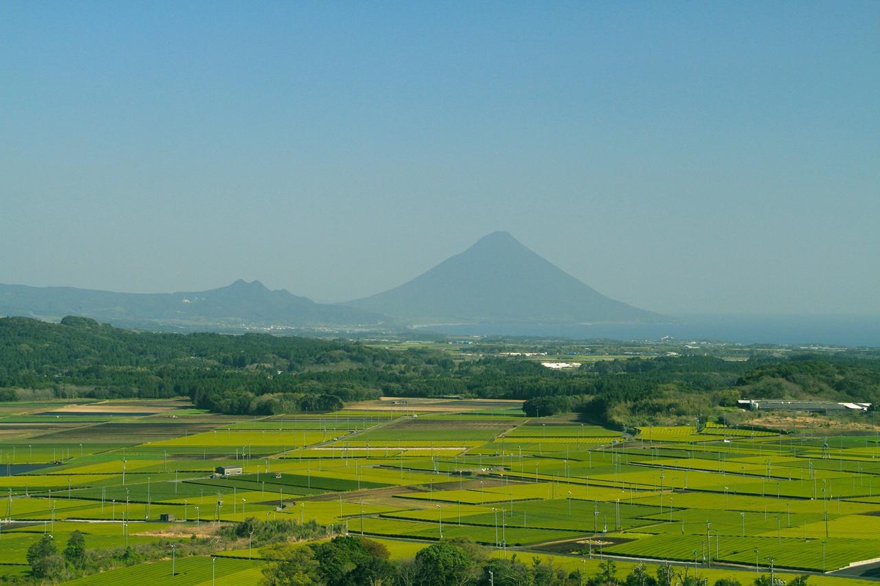 高塚の丘 ・ 塗木製茶工場(見学・直販)-1
