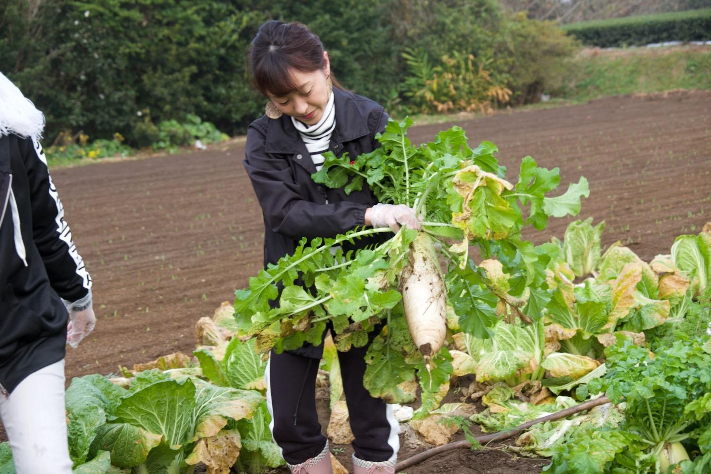 農家の気分をリアルに味わう、朝一番の「野菜収穫」!-1