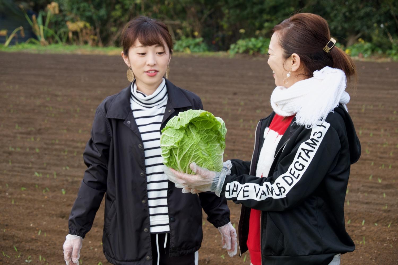 農家の気分をリアルに味わう、朝一番の「野菜収穫」!-4