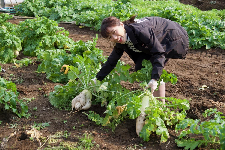 農家の気分をリアルに味わう、朝一番の「野菜収穫」!-2