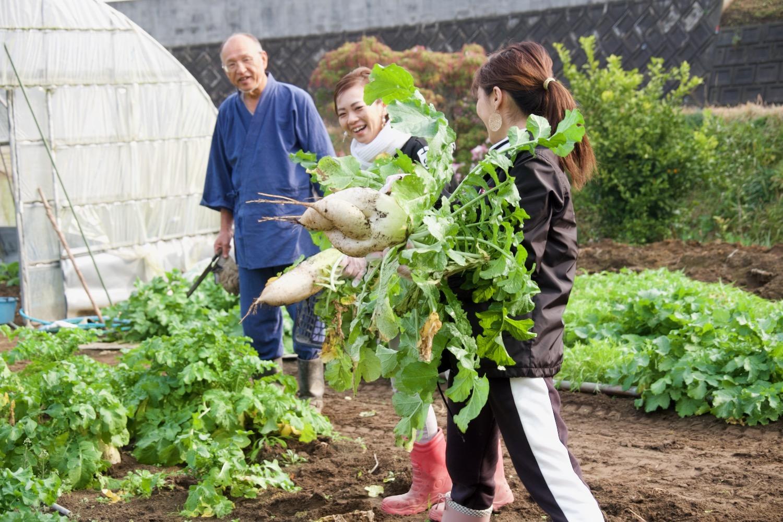 農家の気分をリアルに味わう、朝一番の「野菜収穫」!-0