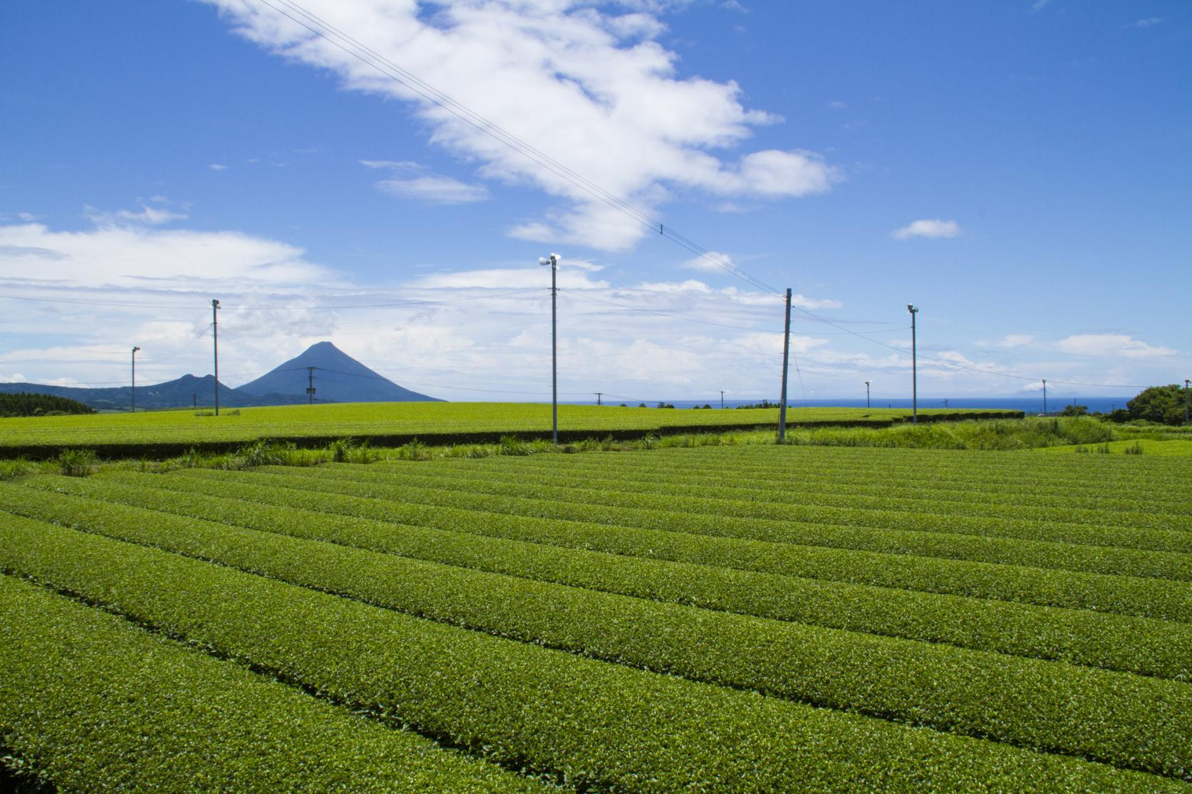 《Virtual Tour Ⅴ》
