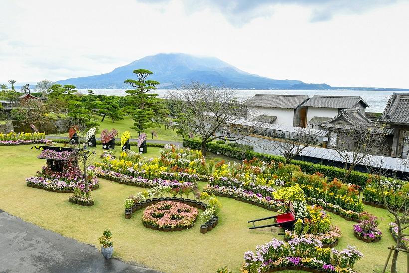 仙巌園の菊まつりで秋を満喫-0