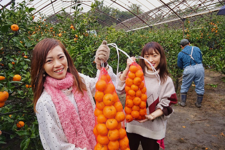 桜島の特産物「みかん」を収穫してみよう!-2