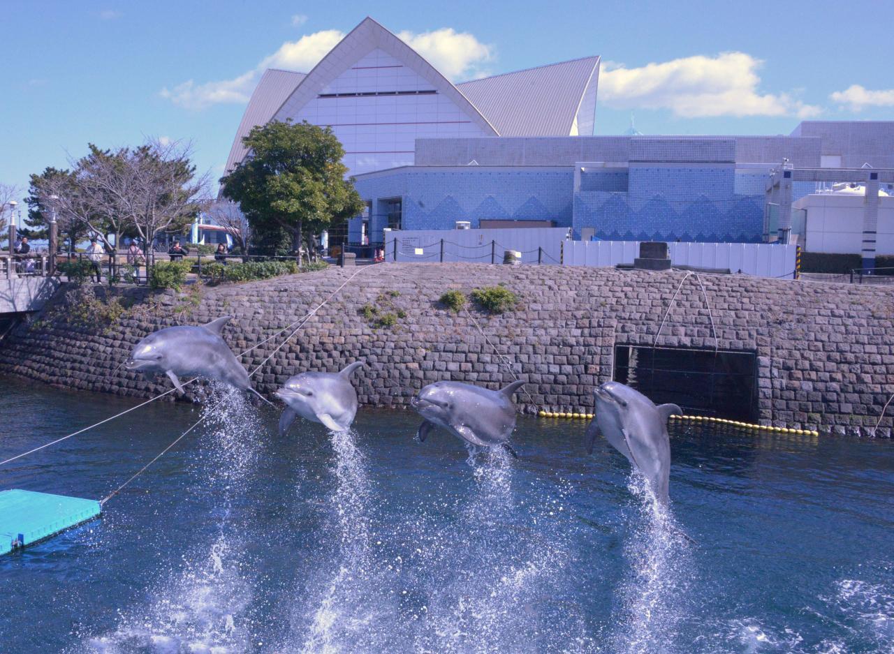 コース11:イルカとの出会いと桜島展望-1