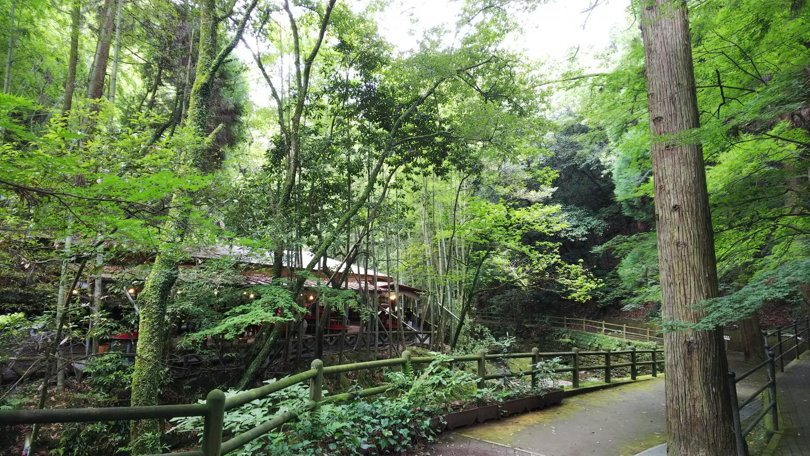 지겐지 공원-1