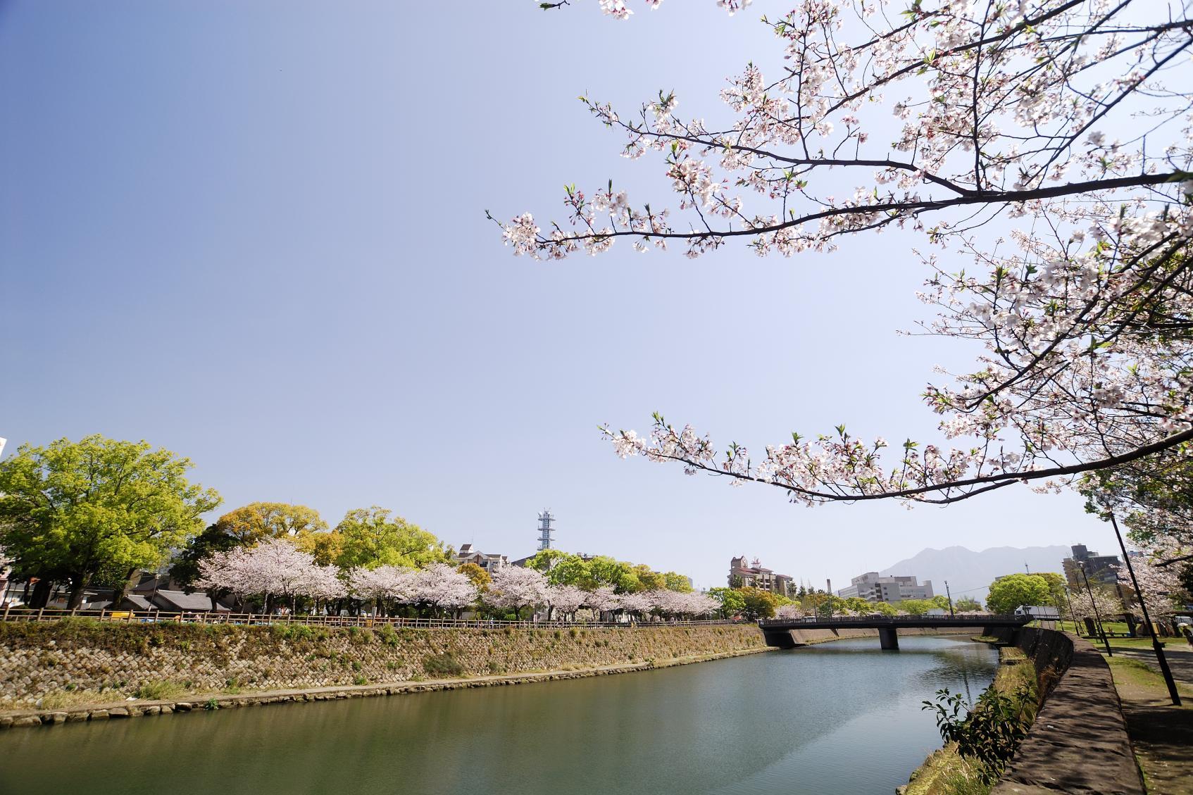 고쓰키가와 강변-1