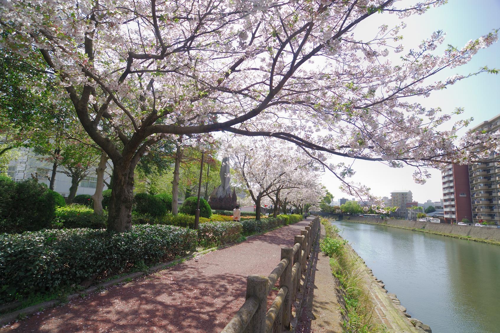 고쓰키가와 강변-2