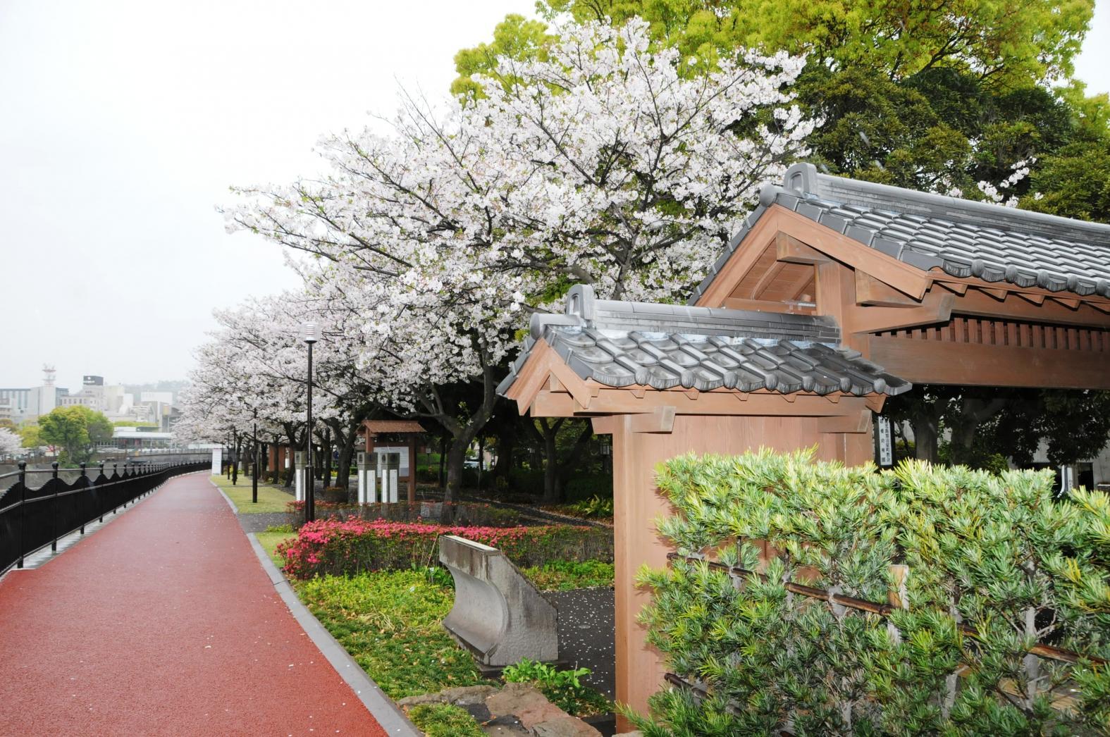 고쓰키가와 강변-9