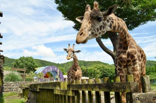 鹿児島市立平川動物公園-0
