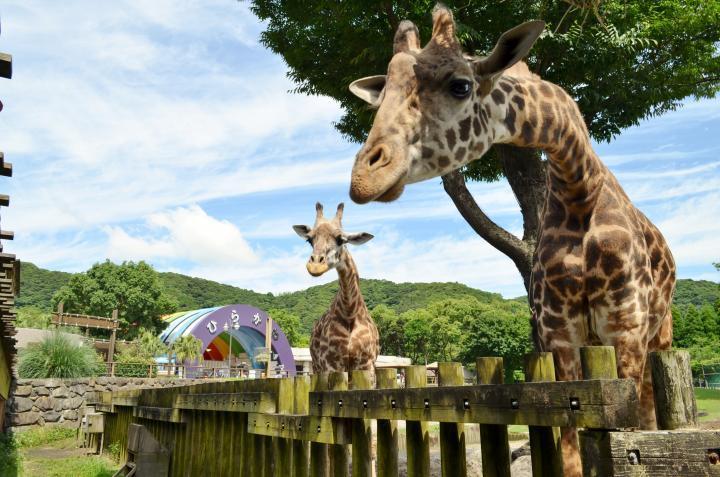 히라카와 동물공원-1