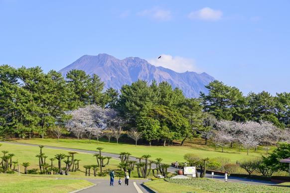 요시노 공원-9