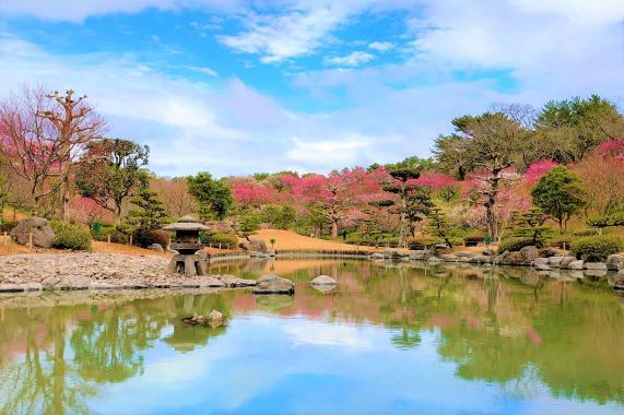 요시노 공원-1