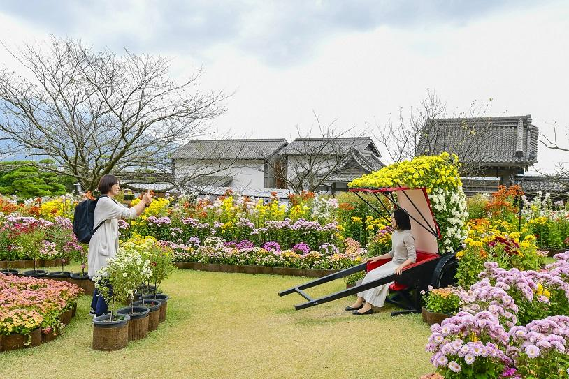 仙巌園 菊まつり-4