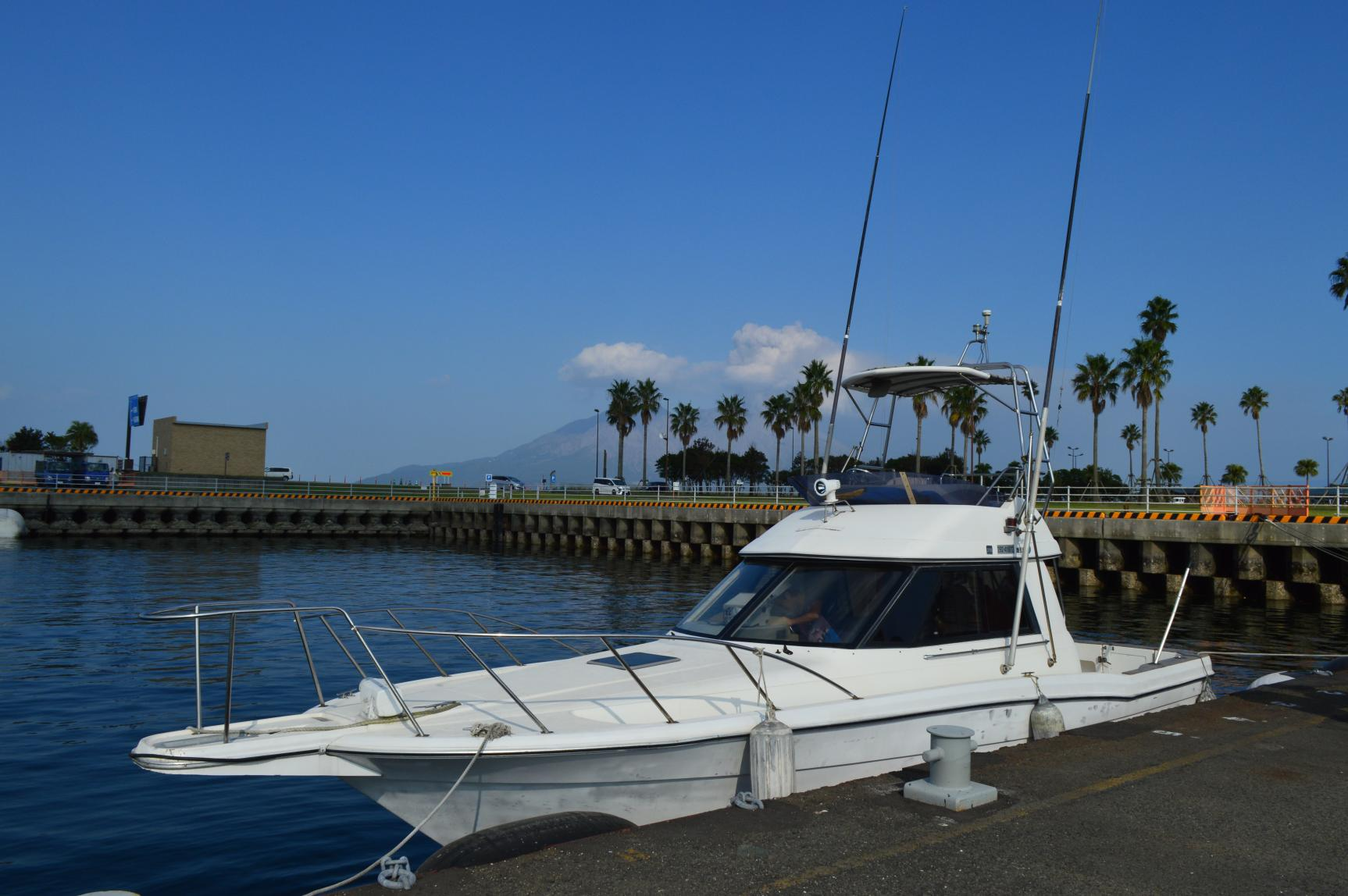 Kagoshima city Blue Marine Cab Dolphin watching & Cruising-2
