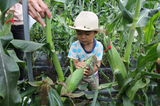 グリーンファーム 農業体験-3
