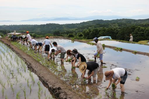 グリーンファーム 農業体験-1