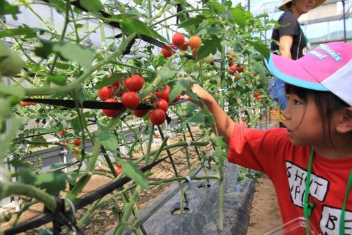 グリーンファーム 農業体験-5