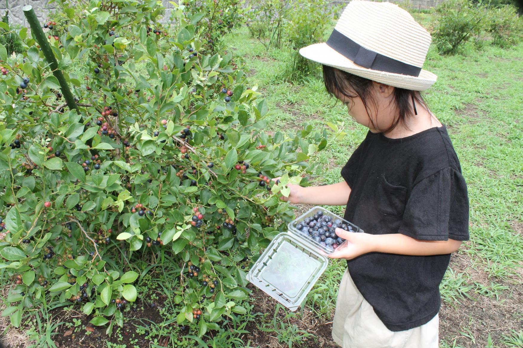 グリーンファーム 農業体験-8