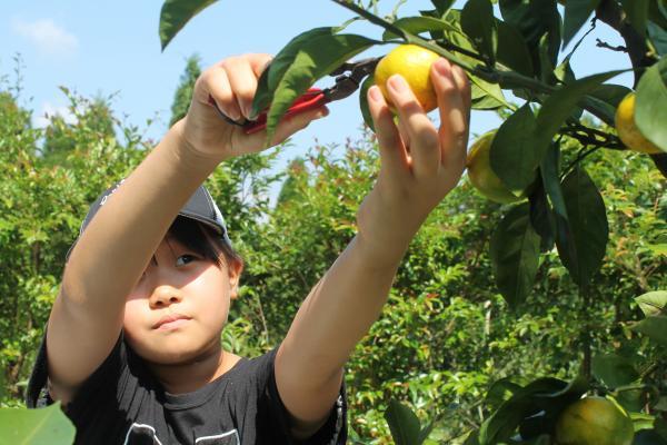 グリーンファーム 農業体験-0