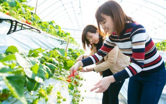 【阿久根市】農場花園 空-0