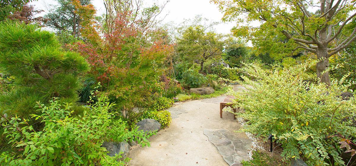 【阿久根市】農場花園 空-2